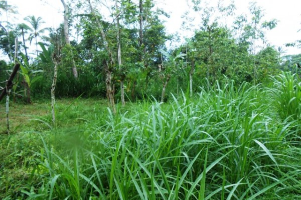 Land for sale in Ubud Bali 10 are in Tegalalang with natural view – LUB180