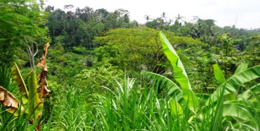 Land for sale in Ubud stunning river and jungle view in Tegalalang – LUB154