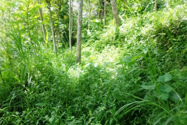 Land for sale in Ubud Bali hidden beauty in Tegalalang – LUB155