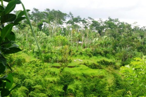 Land for sale in Ubud Bali untouched, natural and beautiful – LUB167