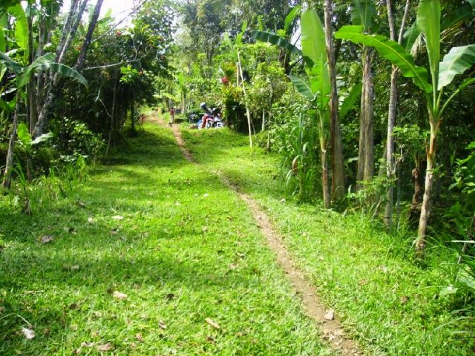 Land for sale in Ubud suitable for investment – LUB072
