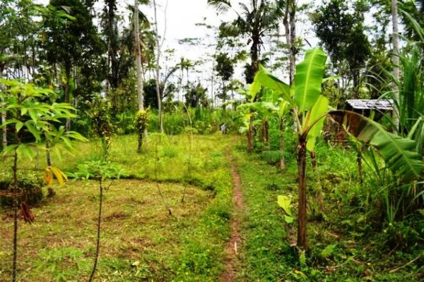 Land for sale in Ubud beautiful view suitable private villa – LUB074