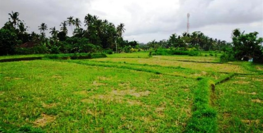 Land for sale in Ubud natural rice field view – LUB085