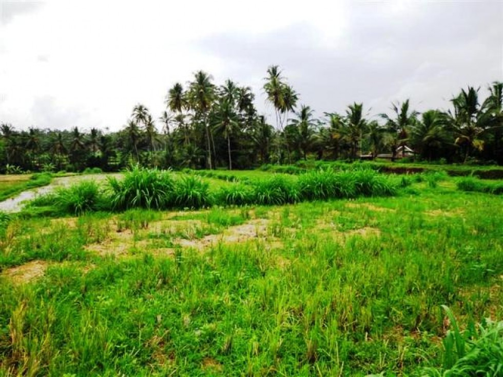 Land for sale in Ubud green forest and small river views – LUB084