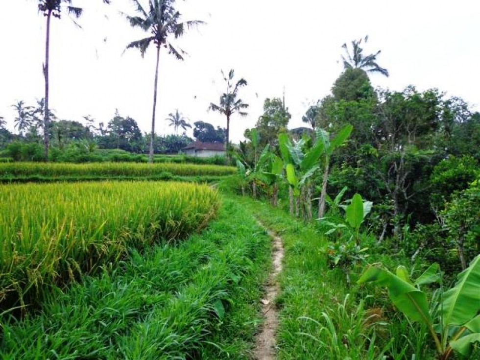 Land for sale in Ubud natural green views – LUB091
