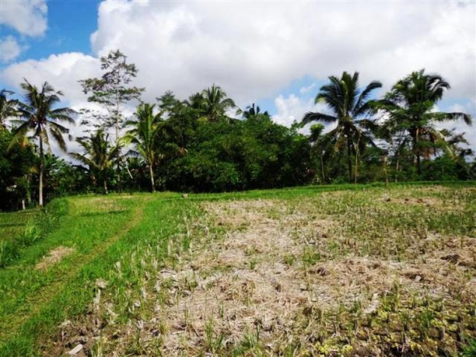 Land for sale in Ubud overlooking to the rice paddies – LUB094