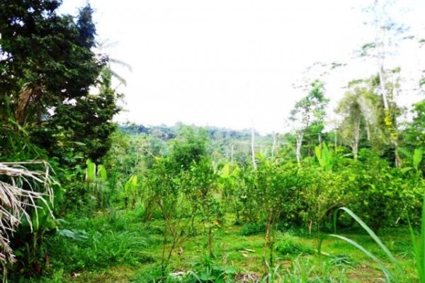Land for sale in Ubud rice field view – LUB098