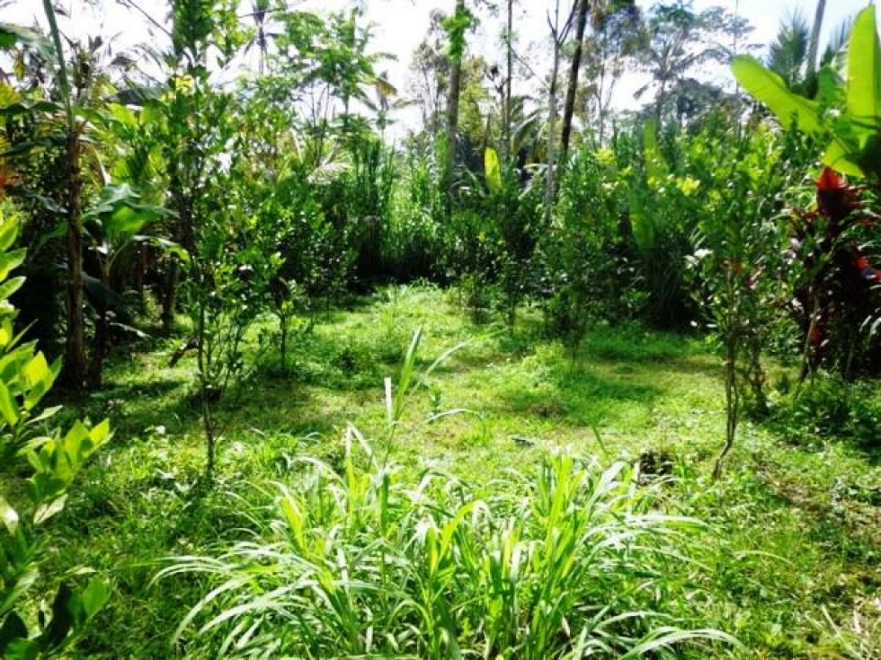 Land for sale in ubud with rice field and river view – LUB099
