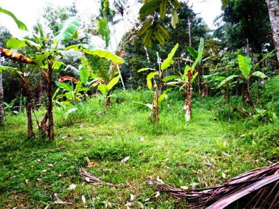 Land for sale in Ubud Bali with rice fields and volcano views – LUB102