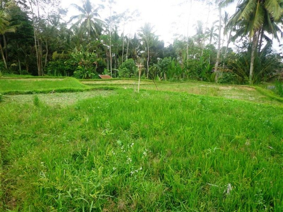 Land for sale in Ubud suitable for villa – LUB109