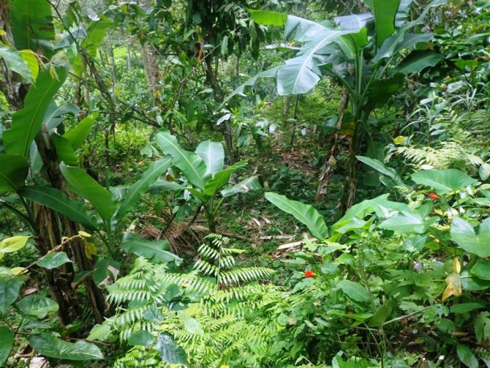 Land for sale in Ubud with cliff view – LUB110