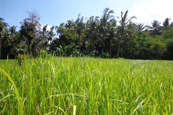 Land for sale in Ubud with Amazing view river valley and rice fields – LUB113