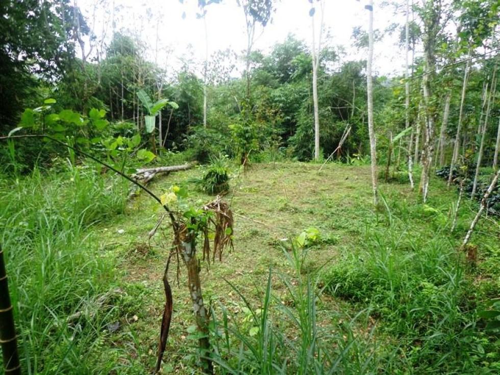 Land for sale in Ubud strategic location – LUB117