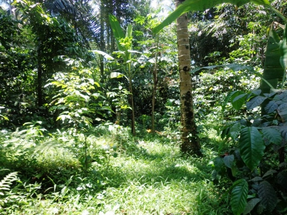 Land for sale in Ubud 650 m2 Great natural view – LUB137