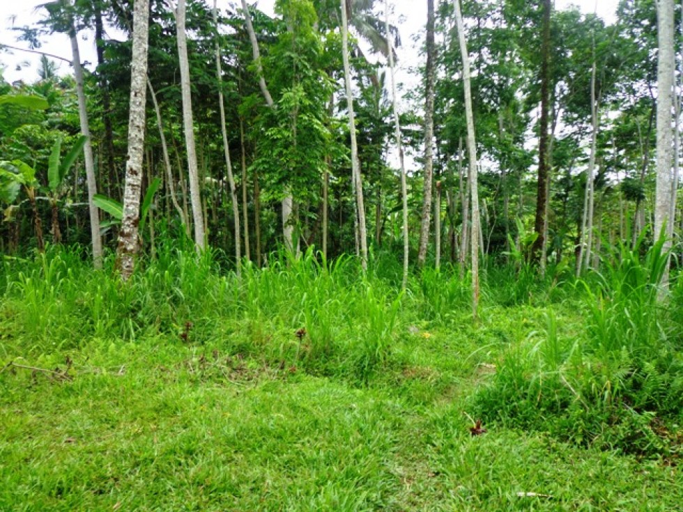Land for sale in Ubud near to the Pesiden palace Tampaksiring – LUB145