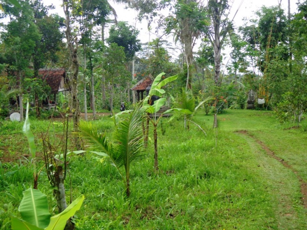 Land for sale in Ubud Tegalalang magnificent view – LUB146