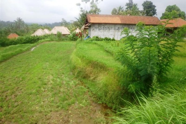 Land for sale in Ubud Tegalalang stunning view – TJUB152
