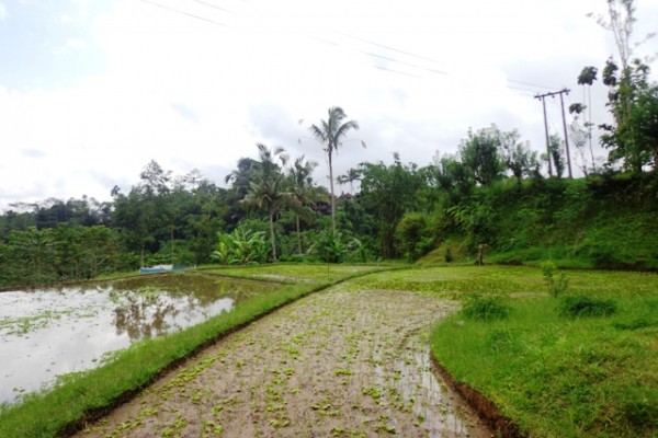 Land in Ubud for sale with stunning rice field view in Ubud Tegalalang