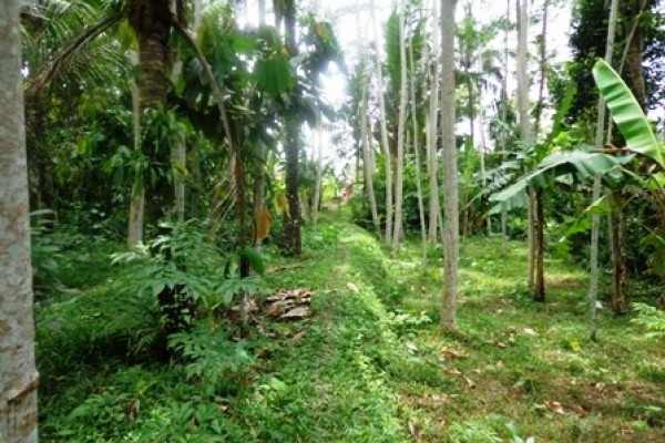 Land for sale in Ubud Bali close to Ubud Center – LUB191
