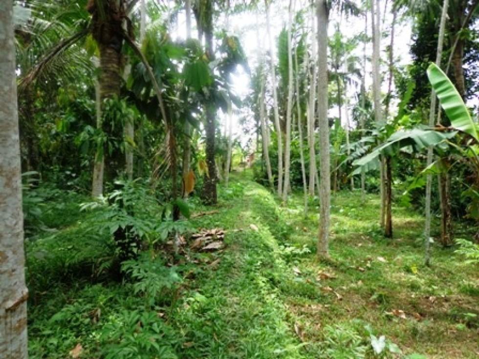 Land for sale in Ubud Bali close to Ubud Center – LUB191