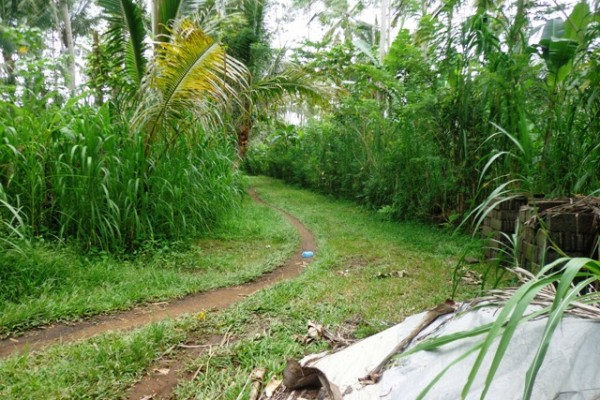Land for sale in Ubud Bali 1,200 m2 with Natural view