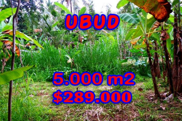Land for sale in Bali, Amazing view in Ubud Bali – 5.000 sqm @ $ 58