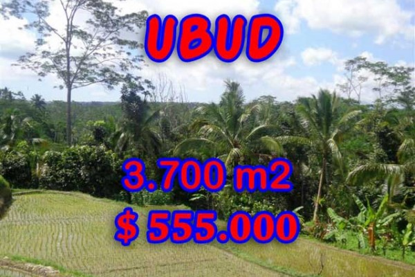 Land for sale in Bali, Fantastic view in Ubud Bali – 3,700 sqm @ $ 150