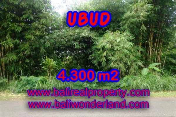 Land for sale in Bali, Spectacular view in Ubud Bali – 4,300 m2 @ $ 72