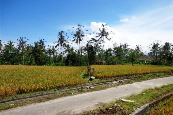 Excellent Property for sale in Bali, land for sale in Ubud Bali  – 2.000 m2 @ $ 133