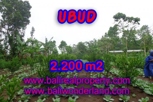 Exceptional Property in Bali, Land in Ubud Bali for sale – 2.200 m2 @ $ 75