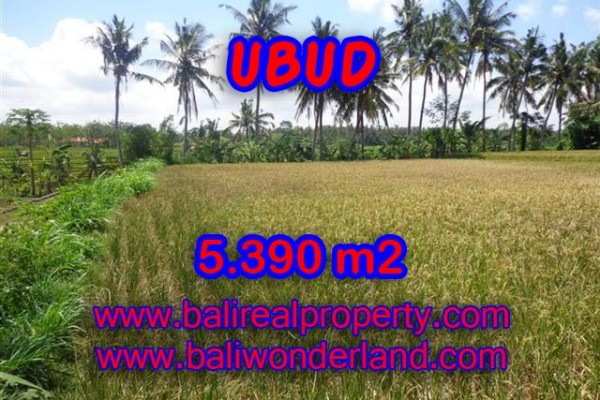 Land for sale in Bali, Outstanding property in Ubud Bali – 5.390 m2 @ $ 200