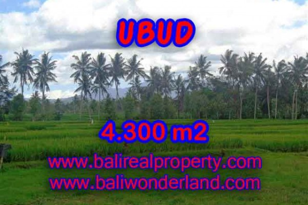 Land for sale in Bali, Outstanding property in Ubud Bali – 4.300 m2 @ $ 235
