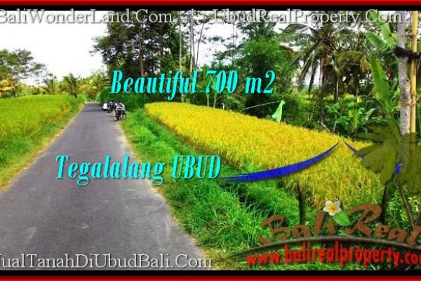 FOR SALE Affordable LAND IN Ubud Tegalalang TJUB497