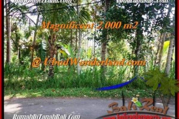 Beautiful PROPERTY Ubud Payangan 2,000 m2 LAND FOR SALE TJUB506