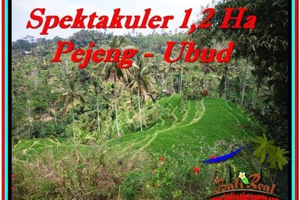 Beautiful PROPERTY LAND IN UBUD FOR SALE TJUB520