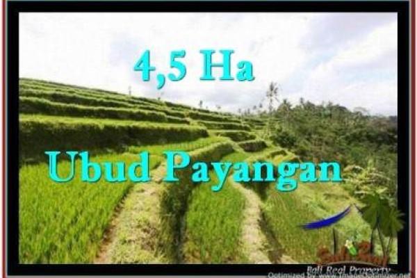 Affordable LAND IN Ubud Payangan BALI FOR SALE TJUB533