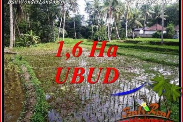 Beautiful Property Ubud Tegalalang 16,000 m2 Land for sale TJUB735