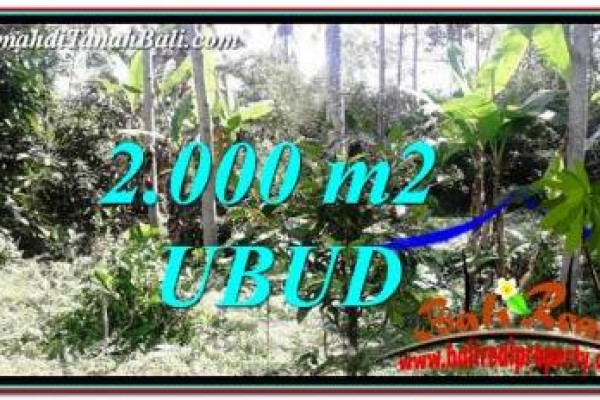 Affordable PROPERTY 2,000 m2 LAND FOR SALE IN Ubud Tegalalang TJUB747