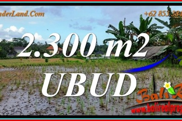 Affordable 2,300 m2 LAND for SALE in Tampaksiring BALI TJUB813