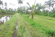 Land for sale in Ubud Bali realizing your dream villa – LUB158