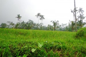 Land for sale in Ubud Bali on the green valley – LUB161