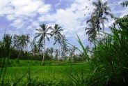 Land for sale in Ubud suitable for villa or ressort hotel – LUB071