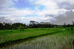 Land for sale in Ubud view of the river and rice fields – LUB092
