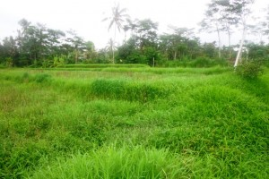 Land for sale in Ubud 28 are Rice fields view in Tegalalang Ubud – LUB149