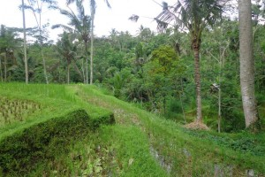 Land for sale in Ubud by the river valley with rice fields view in Payangan – LUB141