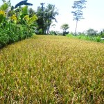 Land for sale in Ubud Bali - LUB138