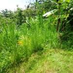 Land for sale in Ubud Bali - LUB154