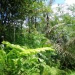 Land for sale in Ubud Bali - LUB155