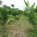 Land for sale in Ubud Bali - LUB156
