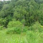 Land for sale in Ubud Bali - LUB158